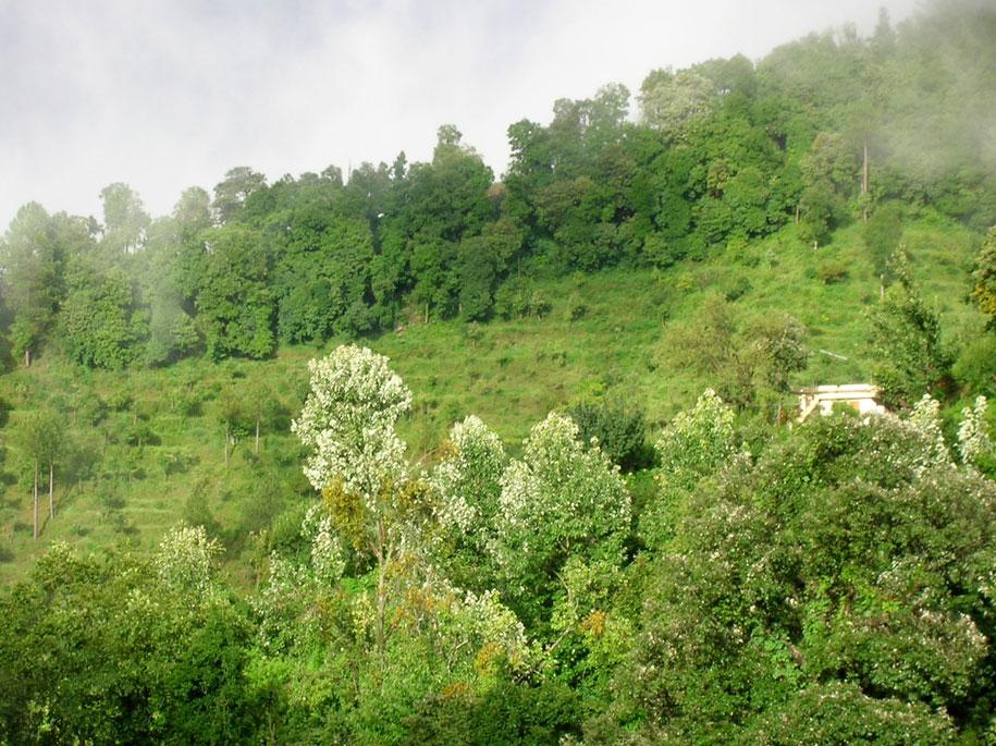 gagar-forest
