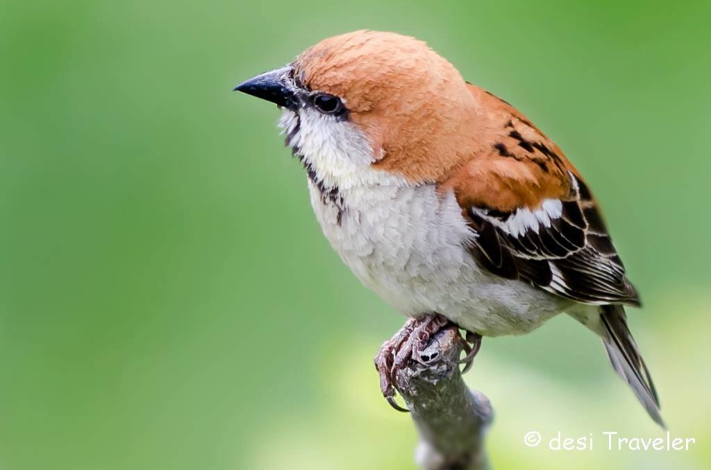 little-bird-kumaon