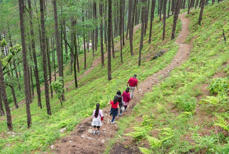 pine-forest-trek-featured