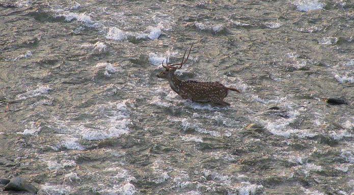 wildlife in pangot, uttarakhand